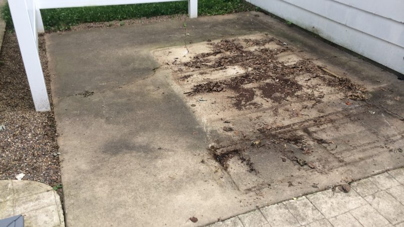 Concrete Patio Cleaning: Before