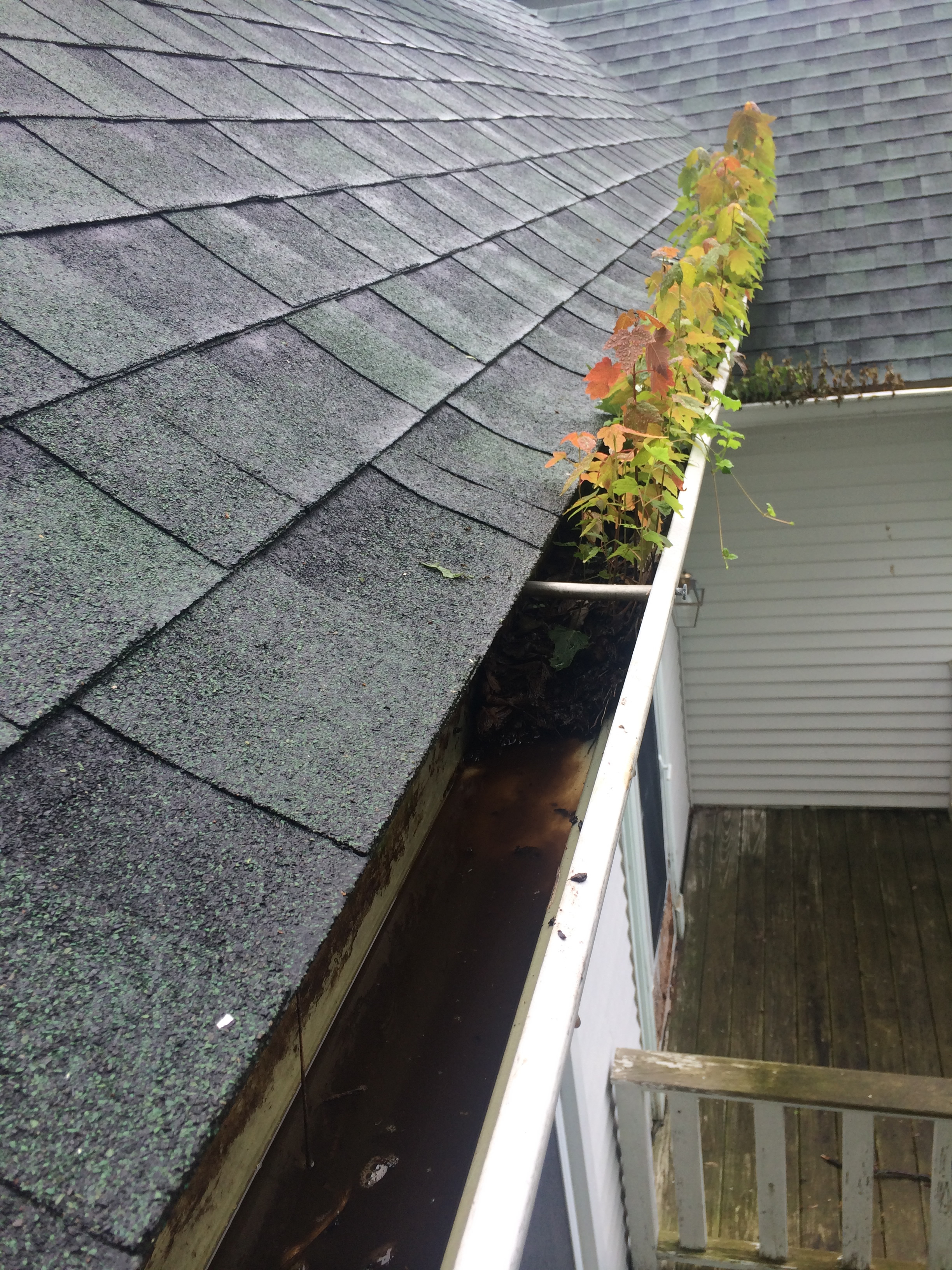 Bellevue Gutter Cleaning